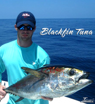 Blackfin Tuna 700 x 700
