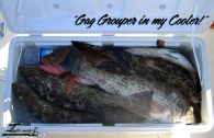 Gag Grouper Catch