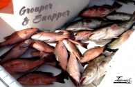 Grouper and Snapper for Everyone
